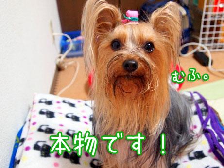 1_20100405192759.jpg
