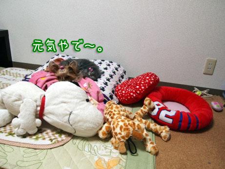 1_20100408193633.jpg