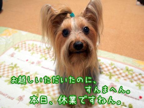 1_20100409185450.jpg