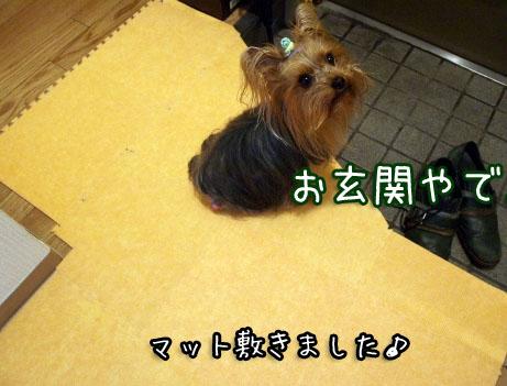1_20100415204056.jpg