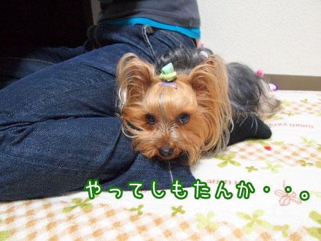 1_20100421104631.jpg