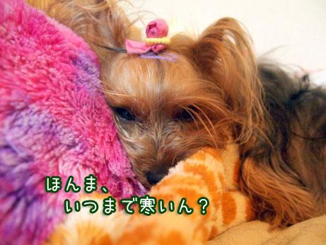 1_20100425140152.jpg