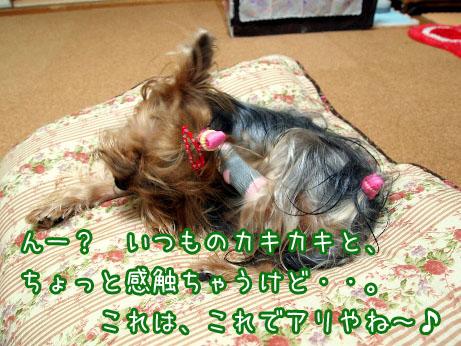 1_20100427194251.jpg