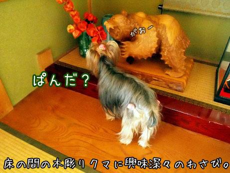 1_20100504172410.jpg