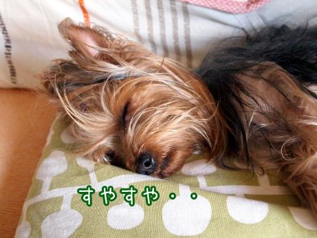 1_20100510191213.jpg