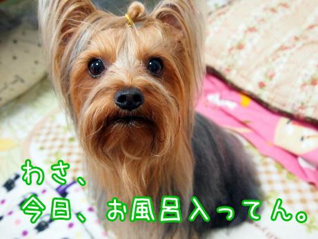 1_20100516185328.jpg