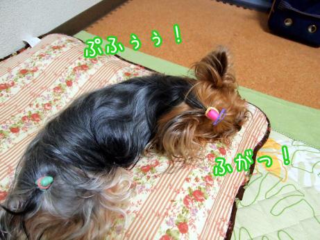 1_20100525191928.jpg