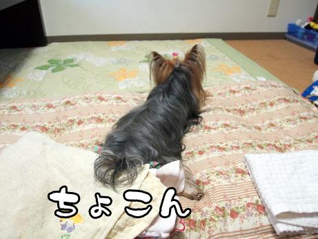 1_20100529203156.jpg