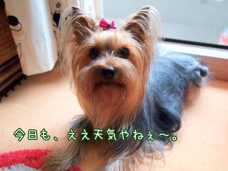 1_20100604173552.jpg