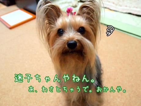 1_20100608181101.jpg