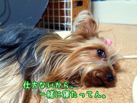 1_20100611185719.jpg