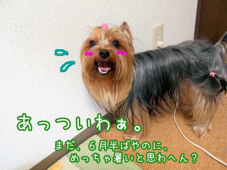 1_20100620085612.jpg