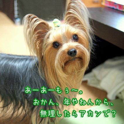 1_20100706190956.jpg