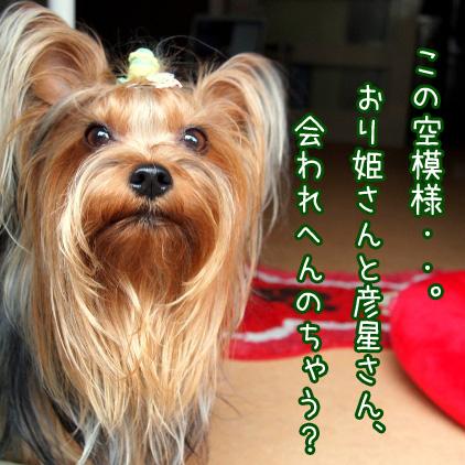 1_20100707205233.jpg