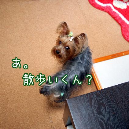 1_20100708155616.jpg