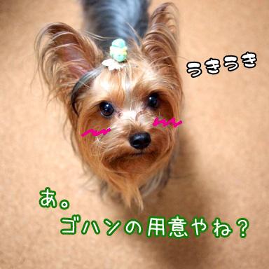 1_20100713192407.jpg