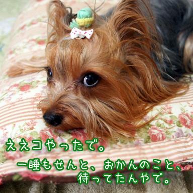 1_20100721164618.jpg