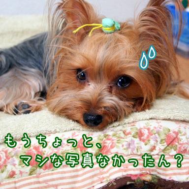 1_20100726191410.jpg