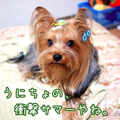 1_20100727201444.jpg