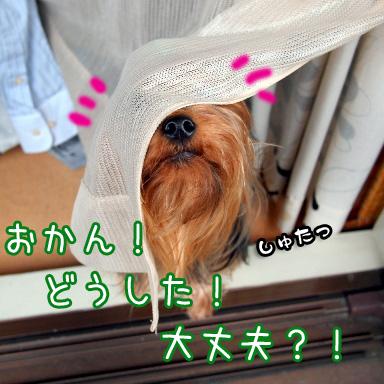 1_20100728185929.jpg