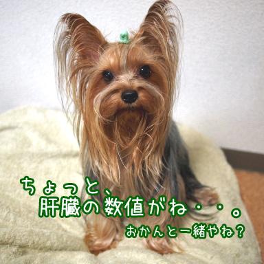 1_20100729192847.jpg