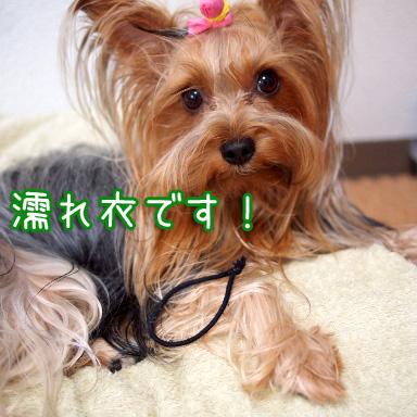 1_20100810201834.jpg