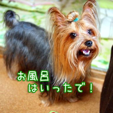 1_20100811190839.jpg