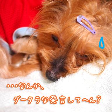1_20100819194204.jpg