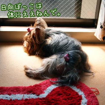 1_20100822191519.jpg