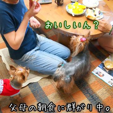 1_20100824180932.jpg