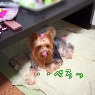 1_20100827205936.jpg