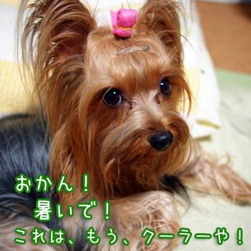 1_20100829194437.jpg