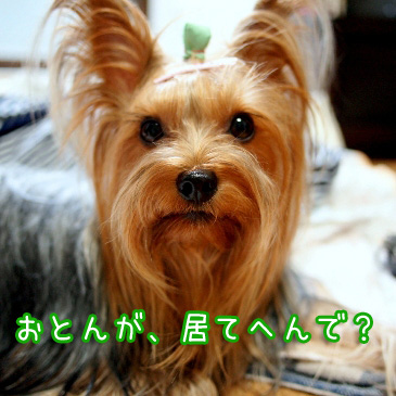 1_20100902170637.jpg