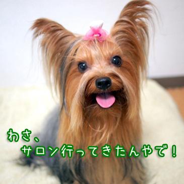 1_20100914205341.jpg