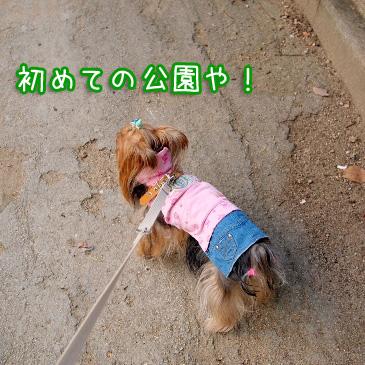 1_20101014201430.jpg