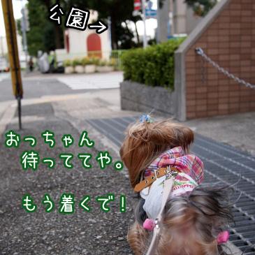 1_20101015192826.jpg