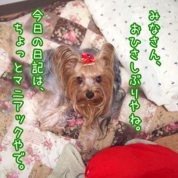 1_20101025190757.jpg
