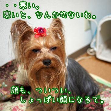 1_20101029191321.jpg
