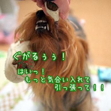 1_20101103190541.jpg