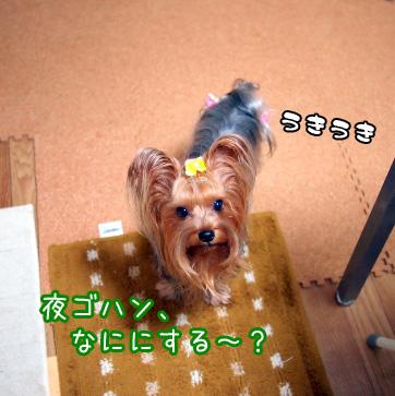 1_20101109195632.jpg