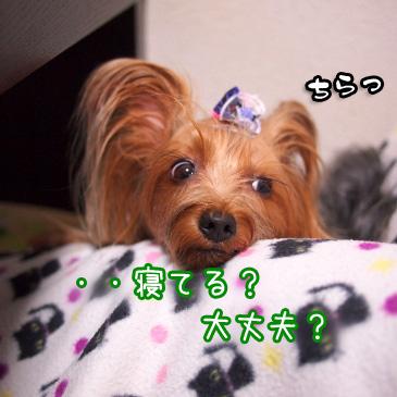 1_20101116185116.jpg