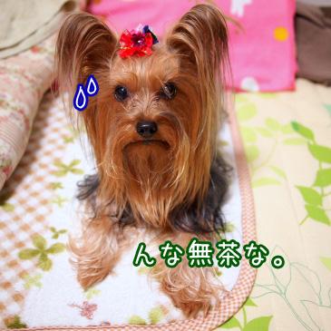 1_20101203174117.jpg