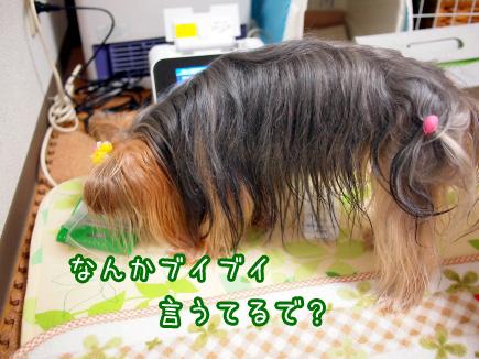 1_20101208193809.jpg