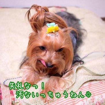 1_20101210194507.jpg