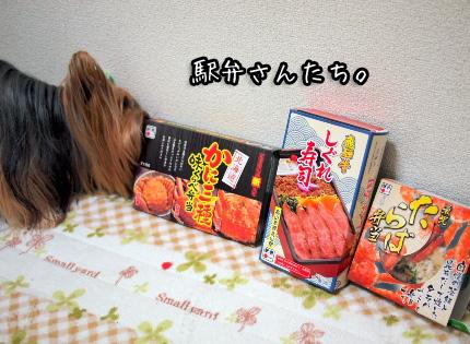 1_20101213200945.jpg