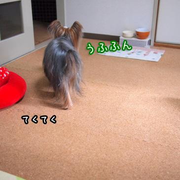 1_20101225160613.jpg