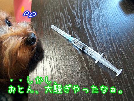 2_20100207141709.jpg