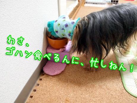 2_20100227192559.jpg