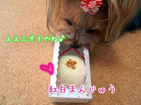 2_20100303190026.jpg