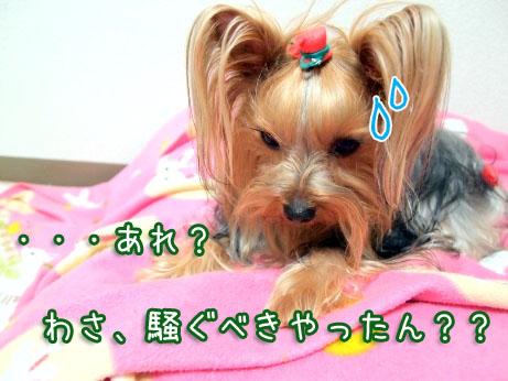 2_20100324120048.jpg